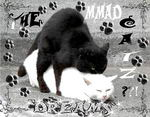 THE MMAD CATZ?!!. Click at the picture to enlarge